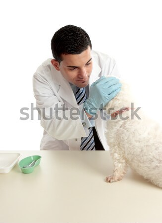 Vet with a dog Stock photo © lovleah