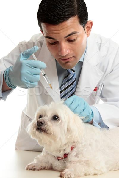Vet medicating small dog needle Stock photo © lovleah