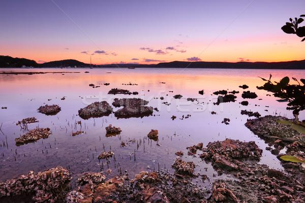 Zonsondergang zonsondergang naar brisbane schemering groene Stockfoto © lovleah