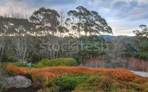 Blue Mountains Australia Stock photo © lovleah