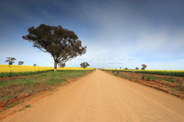 Vidéki út vidéki farm kosz virágzó fa Stock fotó © lovleah