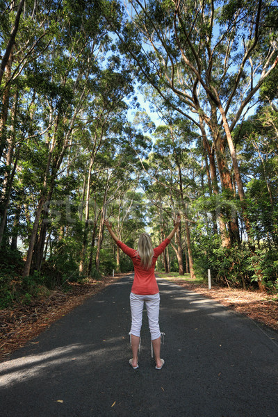 Standing among the tall gum trees on a remote country road Stock photo © lovleah