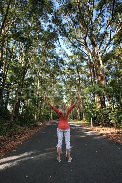 Piedi alto gum alberi remote Foto d'archivio © lovleah