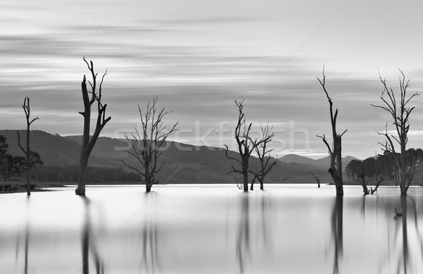 Steadfast trees emerge from the lakes waters. Stock photo © lovleah