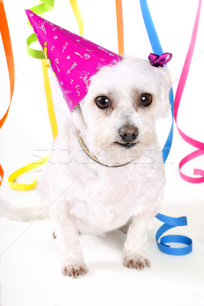 Cute puppy party celebration Stock photo © lovleah