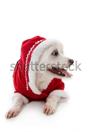Dog wearing a little red riding hood Stock photo © lovleah