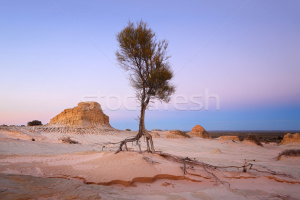 Searching for water arid landscape Stock photo © lovleah