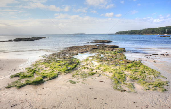 Moss covered rocks and rock pools  Stock photo © lovleah