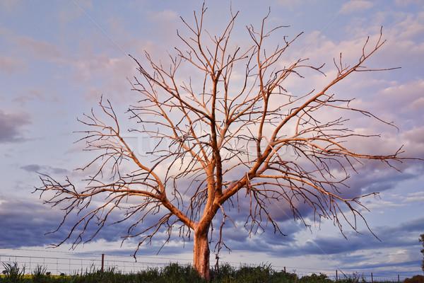 şaşırtıcı ağaç ışık gün batımı Stok fotoğraf © lovleah