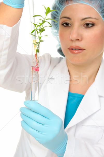 Plant Science or agronomy Stock photo © lovleah