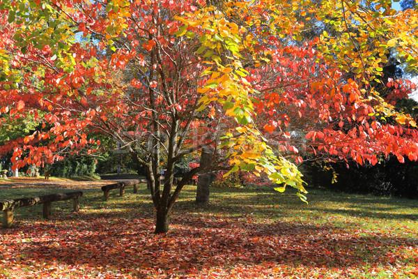 Autumn Colours Stock photo © lovleah