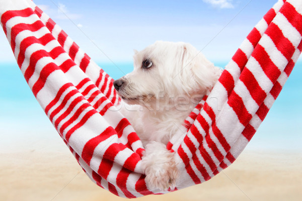 Pet dog summer holiday  Stock photo © lovleah