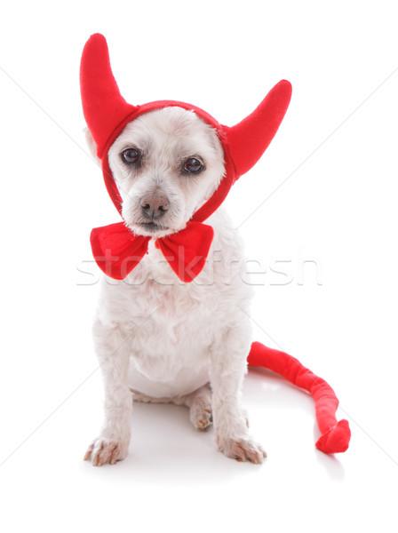 Bad Dog halloween devil costume Stock photo © lovleah