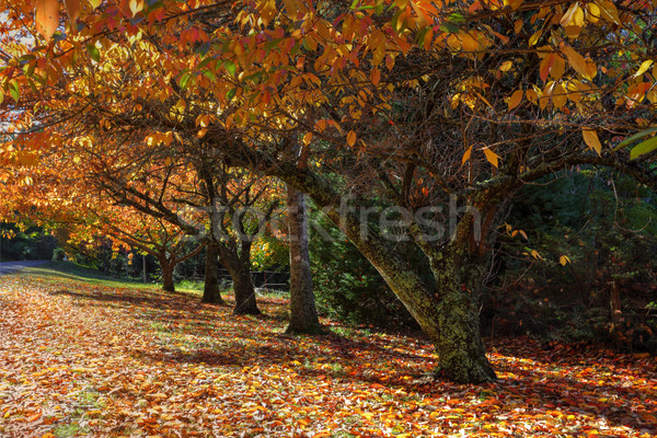 ősz színek fák csetepaté lombhullató levelek Stock fotó © lovleah