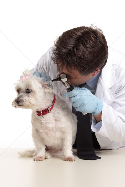 Vet checking dog Stock photo © lovleah