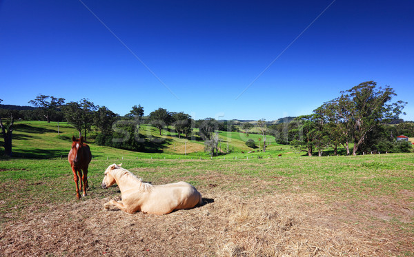 Stock photo: Picturesque Australian landscape
