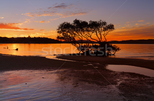 Sunset Salamander Bay Stock photo © lovleah