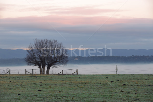 Foggy winter morning countryside and tree silhouette Stock photo © lovleah
