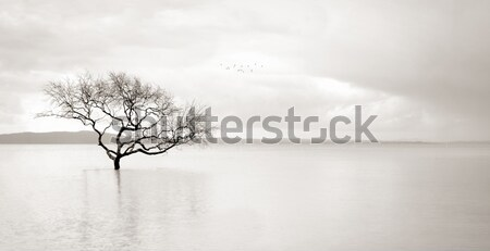 Lone mangrove tree in still waters Stock photo © lovleah