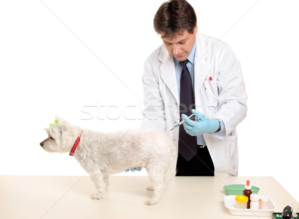 Animal receiving an injection Stock photo © lovleah