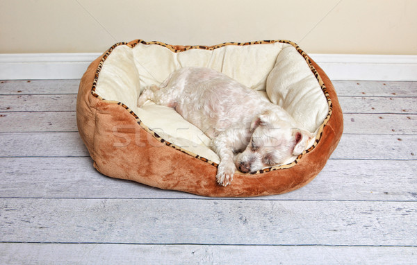Dog sleeping in a dog bed Stock photo © lovleah