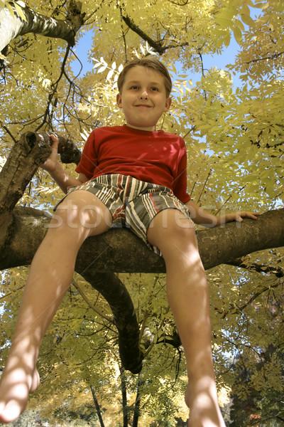 Jongen boom zonlicht gouden bladeren najaar Stockfoto © lovleah