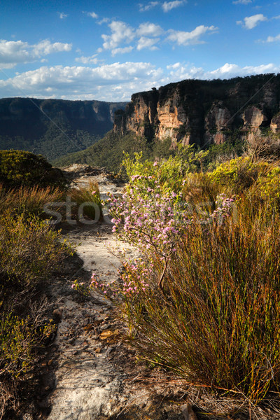 Views across the clifftops Blue Mountains Australia Stock photo © lovleah