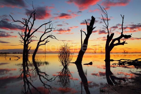 Oude bomen meer zonsondergang silhouetten dode Stockfoto © lovleah
