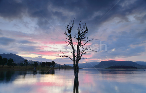 Cool hues over the lake with large tree and nest Stock photo © lovleah