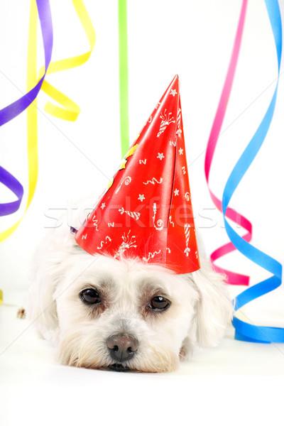 Party Animal Stock photo © lovleah