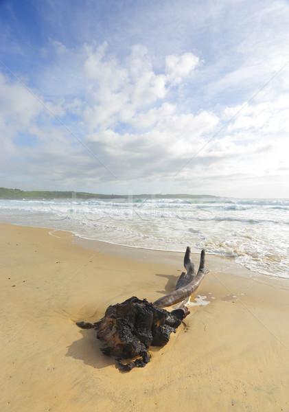 Intertwined at Mystics Beach Stock photo © lovleah