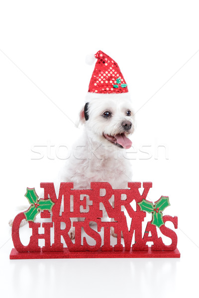 Puppy dog and Merry Christmas sign Stock photo © lovleah
