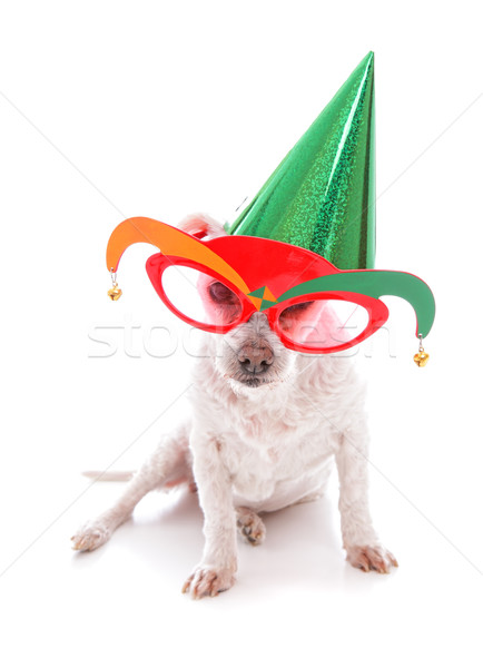 Pet with party hat and court jester glasses Stock photo © lovleah