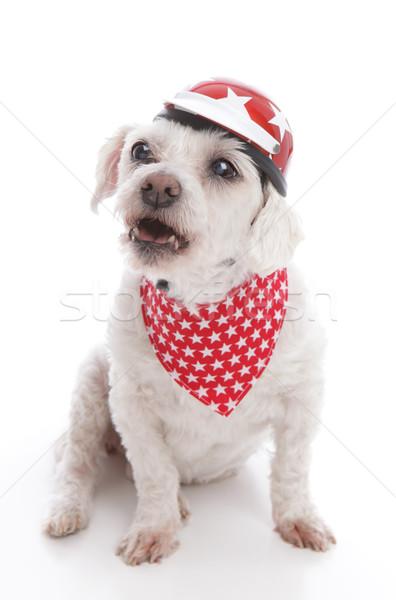 Difícil cão vermelho motocicleta Foto stock © lovleah