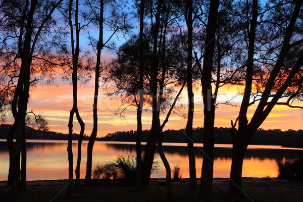 Sunrise reflections and Casuarina silhouettes at the Lagoon Stock photo © lovleah
