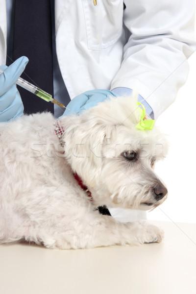 állatorvos kutya tű injekció állatorvos terrier Stock fotó © lovleah