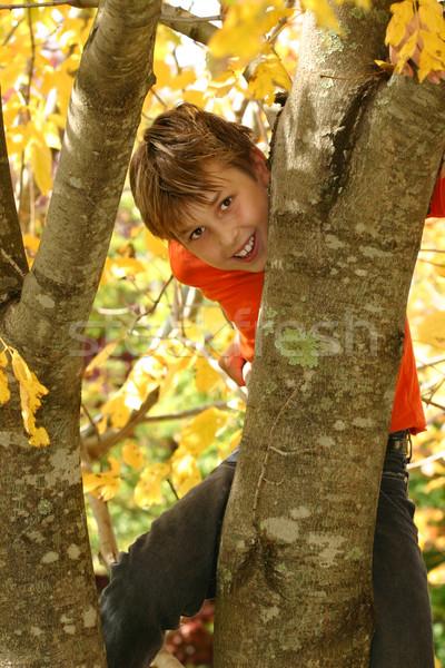 Zdjęcia stock: Chłopca · wspinaczki · drzewo · młody · chłopak · liściastych · pokryty