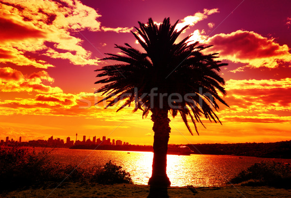 Silhouette of Sydney, Australia Stock photo © lovleah