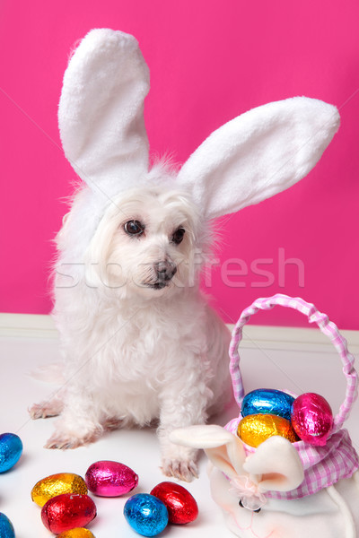 Stock photo: Beautiful puppy with bunny ears and easter eggs
