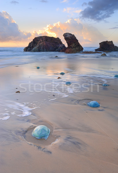 Foto stock: Rocas · azul · medusas · pequeño · huevo