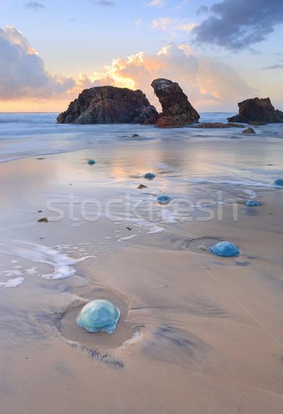 Watongo Rocks and blue Jelly Blubber jellyfish Stock photo © lovleah