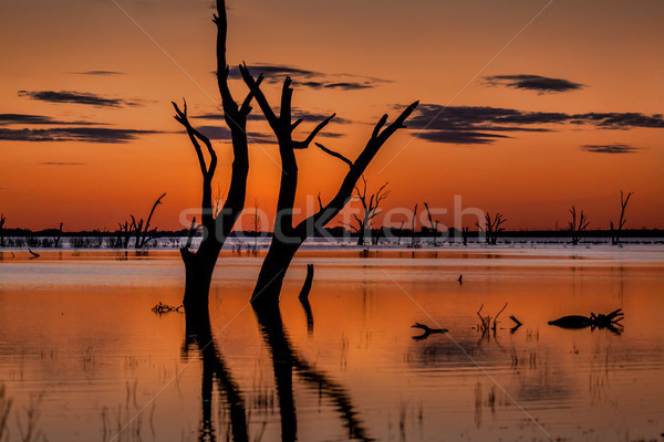 Dusk skies over the magnificent Menindee Lake Stock photo © lovleah