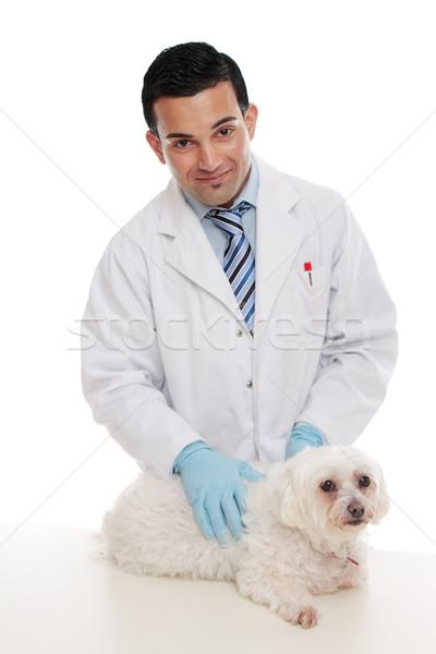 Zdjęcia stock: Przyjazny · weterynarz · domowych · zwierząt · mężczyzna