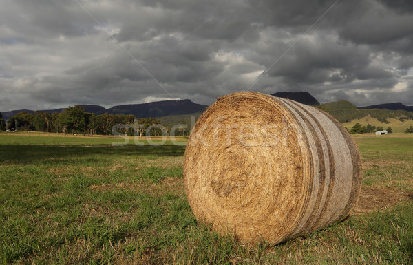 Hay bale in late afternoon light Stock photo © lovleah