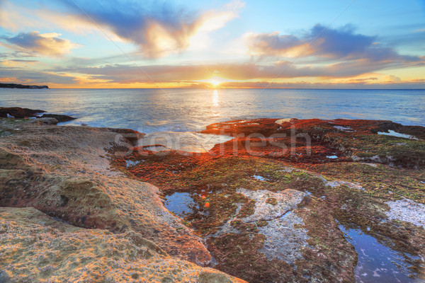 Red and green algae covered rocks at sunrise  Coogee, Sydney Aus Stock photo © lovleah