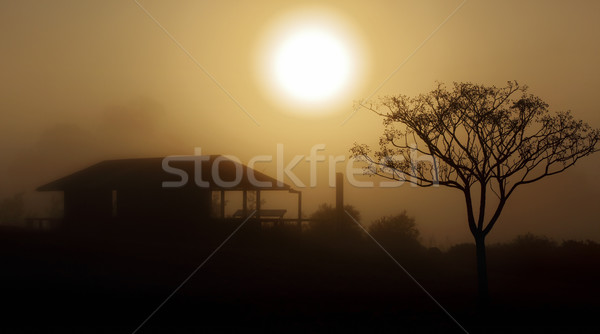 Foggy morning sunrise rural landscape Stock photo © lovleah
