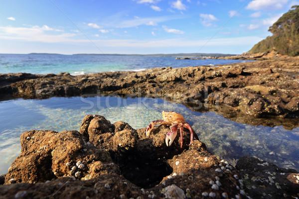 Enchanted Rockpool Jervis Bay Stock photo © lovleah