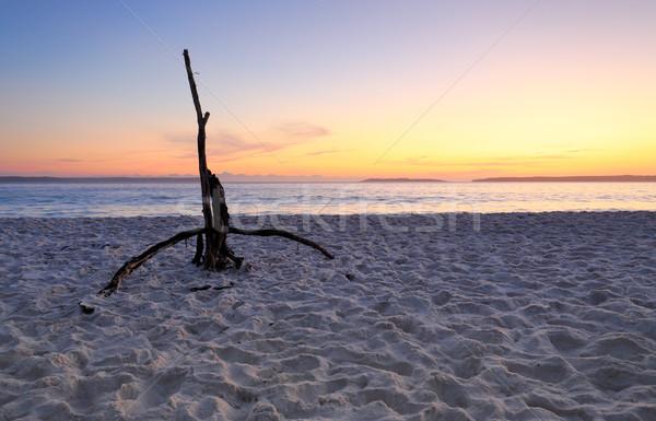 Hajnal tengerpart színek égbolt uszadék homok Stock fotó © lovleah