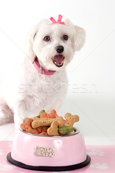 Hond vergadering kom dog bone biscuits Stockfoto © lovleah