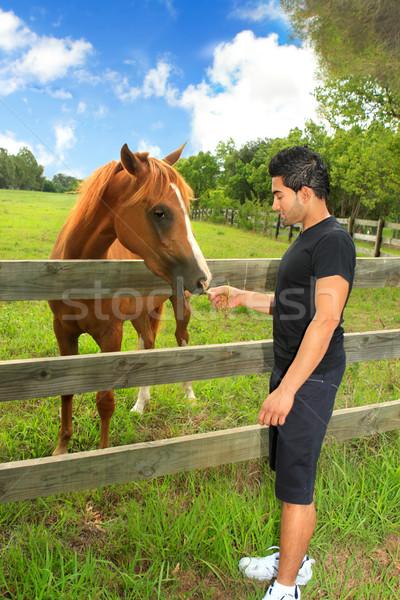 Man feeding a horse in a paddock Stock photo © lovleah